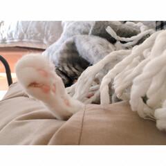 猫の寝相/猫と賃貸/猫とインテリア/一人暮らし/一人暮らしインテリア/ワンルームインテリア/... ソファーからいっぽん  可愛いててが  …(4枚目)