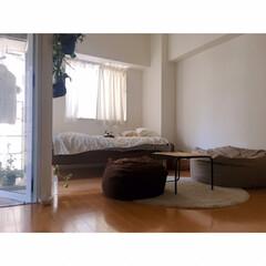 LEDライト/無印良品/間接照明のある暮らし/猫と一人暮らし/猫と賃貸/猫とインテリア/... 現在の昼と夜を撮ってみました。 …
