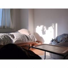 一人暮らしインテリア/ワンルームインテリア/猫と一人暮らし/猫とワンルーム/猫とインテリア/猫と賃貸/... GWもいよいよ終わり。  あっという間で…(2枚目)