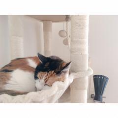 猫とワンルーム/猫と一人暮らし/猫と賃貸/猫とインテリア/猫との暮らし フルスイング  からの…(2枚目)