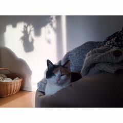 一人暮らしインテリア/ワンルームインテリア/猫と一人暮らし/猫とワンルーム/猫とインテリア/猫と賃貸/... GWもいよいよ終わり。  あっという間で…(5枚目)