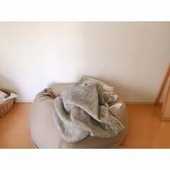 猫と賃貸/賃貸インテリア/一人暮らしインテリア/ワンルームインテリア/猫との暮らし/おやすみショット 海苔巻きミー助。  両端から具材がはみ出…(1枚目)
