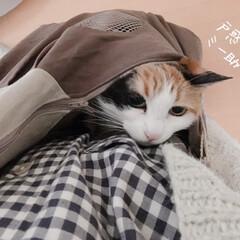 猫の避難訓練/猫の災害対策/猫のいる暮らし/猫のいる生活/猫と一人暮らし/ペットスリング/... やっと買えました、ペットスリング!  コ…(6枚目)