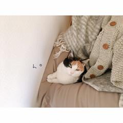 猫との暮らし/賃貸暮らし/一人暮らし/猫と賃貸/猫と1R/猫と一人暮らし/... 😊😸(4枚目)