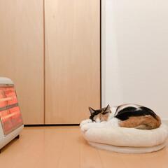 ワンルーム/猫/猫との暮らし/猫との生活/猫とストーブ/一人暮らし/... ミー助のベッドを、ストーブ前に移動させま…