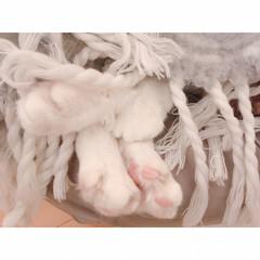 花束🐾/猫の寝相/猫との暮らし/猫とインテリア/猫と賃貸 響かないひとには  まったく響かない…(6枚目)