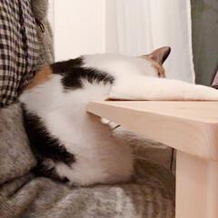 寝落ち/ねこ休み/にゃんこ/猫/にゃんこ同好会/無印良品/... 昨日postした「左腕ホールド&おでこ…