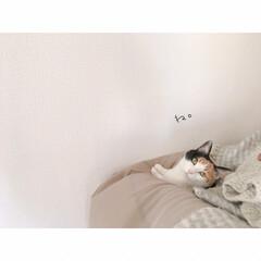 猫との暮らし/賃貸暮らし/一人暮らし/猫と賃貸/猫と1R/猫と一人暮らし/... 😊😸(3枚目)
