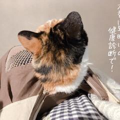 猫の避難訓練/猫の災害対策/猫のいる暮らし/猫のいる生活/猫と一人暮らし/ペットスリング/... やっと買えました、ペットスリング!  コ…(9枚目)