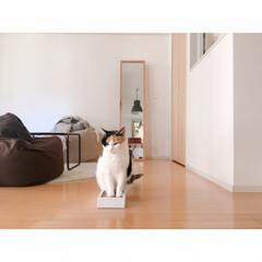 断捨離/猫にマタタビ/猫と一人暮らし/猫と賃貸/賃貸インテリア/一人暮らしインテリア/... 爪とぎを交換しましたФωФ  新しいもの…(6枚目)