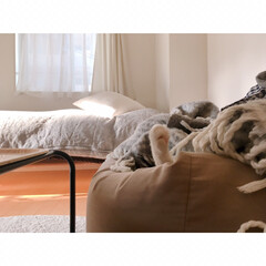 猫の寝相/猫と賃貸/猫とインテリア/一人暮らし/一人暮らしインテリア/ワンルームインテリア/... ソファーからいっぽん  可愛いててが  …(1枚目)