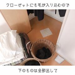 猫と掃除/一人暮らしインテリア/猫との暮らし/猫とインテリア/猫と賃貸/猫と一人暮らし/... 掃除はいつも、ミーとの戦い。(3枚目)