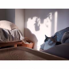 一人暮らしインテリア/ワンルームインテリア/猫と一人暮らし/猫とワンルーム/猫とインテリア/猫と賃貸/... GWもいよいよ終わり。  あっという間で…(3枚目)