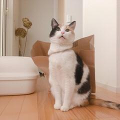 猫/一人暮らし/1R/シンプル/うちの子自慢/三毛猫14歳/... 新年あけましておめでとうございます。  …