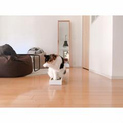 断捨離/猫にマタタビ/猫と一人暮らし/猫と賃貸/賃貸インテリア/一人暮らしインテリア/... 爪とぎを交換しましたФωФ  新しいもの…(4枚目)