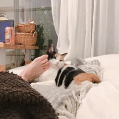 見せる収納/断捨離中/シンプルな暮らし/猫のいる部屋/猫のいる風景/猫との暮らし/... あしでもよし。  気持ちよければそれでよ…