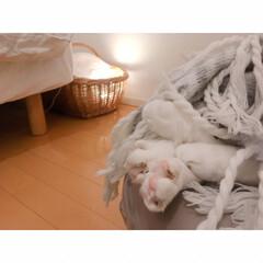 花束🐾/猫の寝相/猫との暮らし/猫とインテリア/猫と賃貸 響かないひとには  まったく響かない…