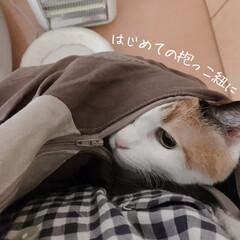 猫の避難訓練/猫の災害対策/猫のいる暮らし/猫のいる生活/猫と一人暮らし/ペットスリング/... やっと買えました、ペットスリング!  コ…(5枚目)