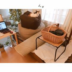 猫と掃除/一人暮らしインテリア/猫との暮らし/猫とインテリア/猫と賃貸/猫と一人暮らし/... 掃除はいつも、ミーとの戦い。(8枚目)