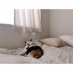 猫との暮らし/猫とインテリア/猫と賃貸/猫と一人暮らし/無印良品/うちの子ベストショット こっち(カメラ)を気にしながらも …
