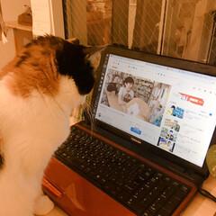 拾い猫/猫の探しもの/メンタリストDaiGo/猫のいる暮らし/猫との生活/猫との時間/... 最近、メンタリストDaiGoさんの…