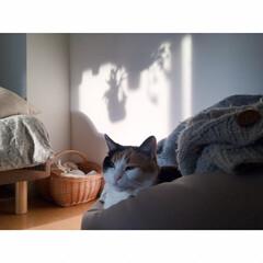 一人暮らしインテリア/ワンルームインテリア/猫と一人暮らし/猫とワンルーム/猫とインテリア/猫と賃貸/... GWもいよいよ終わり。  あっという間で…(4枚目)