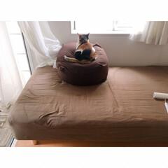 猫と一人暮らし/猫と賃貸/猫とインテリア/猫との暮らし 週に一度の掃除の日。 …(7枚目)