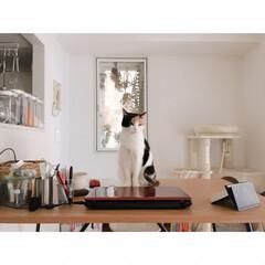 吊るす収納/ダンシャリアン/断捨離/ディスプレイ収納/オープン収納/猫/... 可愛い子にはちょっかいかけずにいられない…