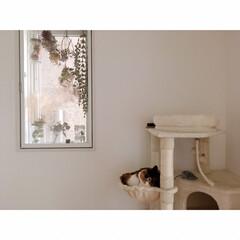 猫とワンルーム/猫と一人暮らし/猫と賃貸/猫とインテリア/猫との暮らし フルスイング  からの…