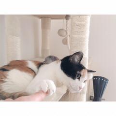 猫とワンルーム/猫と一人暮らし/猫と賃貸/猫とインテリア/猫との暮らし フルスイング  からの…(5枚目)