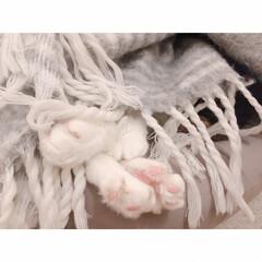 花束🐾/猫の寝相/猫との暮らし/猫とインテリア/猫と賃貸 響かないひとには  まったく響かない…(4枚目)