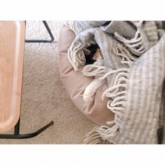 猫の寝相/猫と賃貸/猫とインテリア/一人暮らし/一人暮らしインテリア/ワンルームインテリア/... ソファーからいっぽん  可愛いててが  …(5枚目)