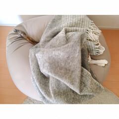 猫と賃貸/賃貸インテリア/一人暮らしインテリア/ワンルームインテリア/猫との暮らし/おやすみショット 海苔巻きミー助。  両端から具材がはみ出…(2枚目)
