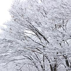 撮影/一眼レフ/Canon/フォロー大歓迎/冬/おでかけ/... 家の近くでの2枚。 陰と陽のような対象的…