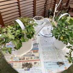 ガーデングッズ/ゴミ箱/メンテナンス/ガーデン/庭/ペイント/... ペイント☆   植木鉢(2点)・ガーデン…