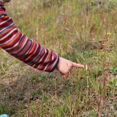 春の一枚 野草取りへ。 つくしがまだギリギリ残って…