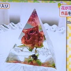 固まるハーバリウム/固めるハーバリウム/ヒルナンデス/フォロー大歓迎 今月始めの日本テレビ昼の番組 「ヒルナン…