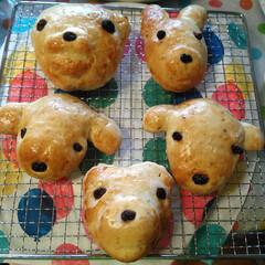 手作りパン/焼き立てパン/おうちカフェ/動物パン 今日は、お昼に、家族👪で、動物パンを焼き…