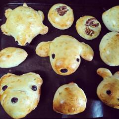 手作りパン/焼き立てパン/おうちカフェ/動物パン 今日は、お昼に、家族👪で、動物パンを焼き…(3枚目)