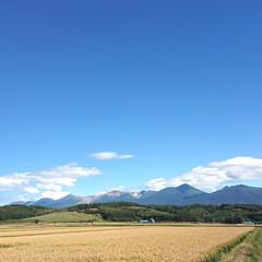 景色/風景写真/風景 昨日だったかな?気持ちいい快晴。 十勝岳…(1枚目)