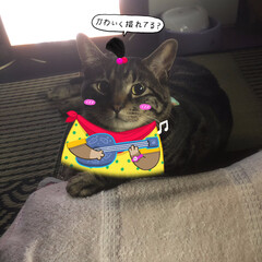LIMIAペット同好会/にゃんこ同好会 カメラ目線(꒪˙꒳˙꒪ )(1枚目)