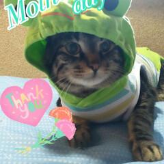 ぽっちゃり猫/愛猫/親バカ/母の日 Happy Mother's day🌷.*