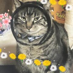 ぽっちゃり猫/親バカ/愛猫 バタバタしてて久々になってしまった😫 パ…