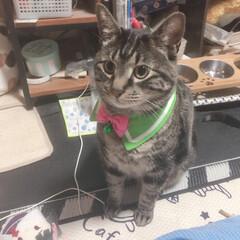 ぽっちゃり猫/自慢の息子/愛猫 ケリケリ玩具 何度となく買ってきたが 一…(4枚目)
