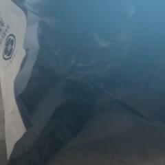 ニャルソック/親バカ/愛猫/ぽっちゃり猫 毎日の日課☘️  鳥さん達を見て〜 お外…(3枚目)