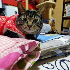 ぽっちゃり猫/親バカ/保護猫/愛猫 暗い事ばかり 書いても ダメなので… 励…