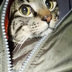 キャットフード/愛猫/ぽっちゃり猫/フォロー大歓迎 当たった(⸝⸝⸝´ꇴ`⸝⸝⸝) 小粒だし…