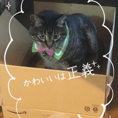 ぽっちゃり猫/自慢の息子/愛猫 ケリケリ玩具 何度となく買ってきたが 一…(3枚目)