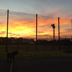 空/夕日/犬 夕陽が綺麗で癒されました🌥(1枚目)
