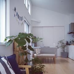 ダイニング/リビング/夏コーデ/夏インテリア/インテリア/雑貨/... 植物と寒色を使って なるべく涼やかな空間…